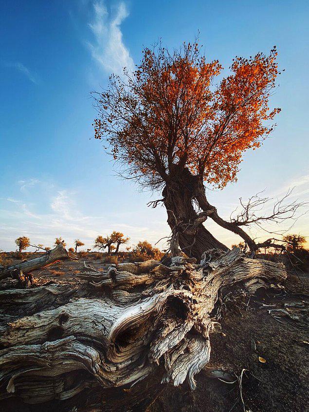 Mobil Fotoğrafçılık Ödülü Alan 25 Fotoğraf